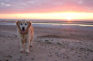 Holme Beach at Sunset